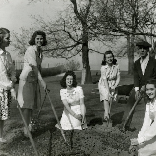 Students help campus gardener plant wartime garden